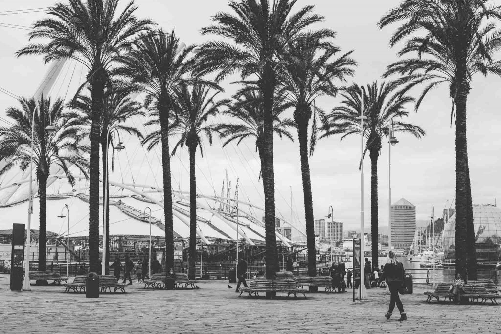 Black and white moody photography of palm trees on a cloudy day at the port of Genova, Italy